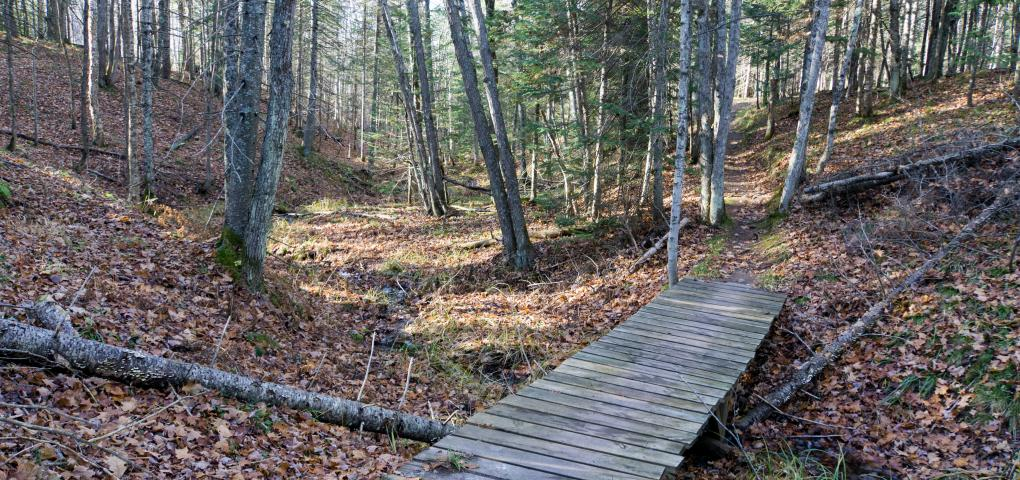 path through the woods with small bridge over wet area with fall leaves all around