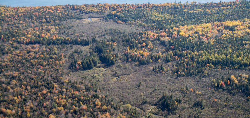shot of land from airplane in fall showing lots of tree species with the different colors