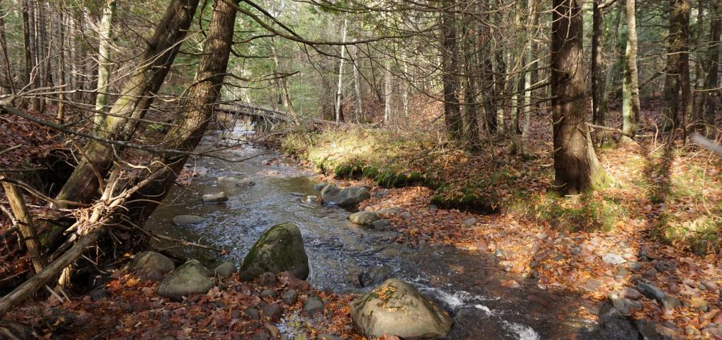 creek flowing through mixed hardwoods in fall with half of the leaves down