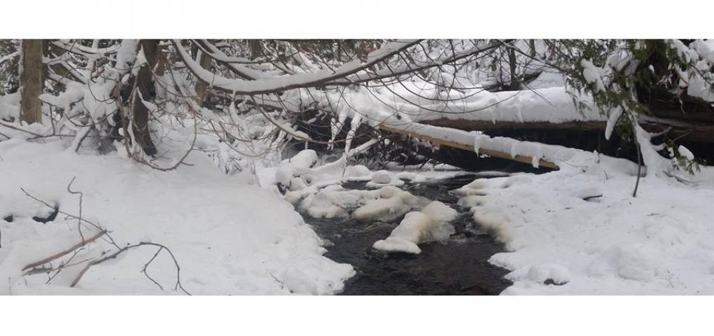 tannin stained creek running under fallen logs with snow all around