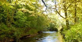 the beautiful Pilgrim river flowing in summer glory